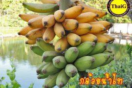 กล้วย น้ำไทย รสหวาน