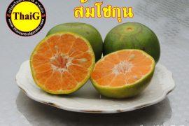 ผลส้มโชกุน ส้มเขียวหวานเนื้อดี