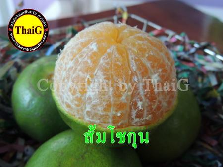 ส้มโชกุน ผลใหญ่เนื้ออร่อย