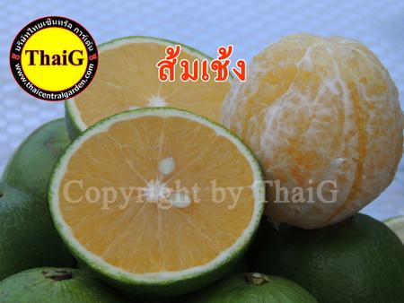 ส้มเช้ง เนื้ออร่อย ผลแก่จัดหวานชื่นใจ